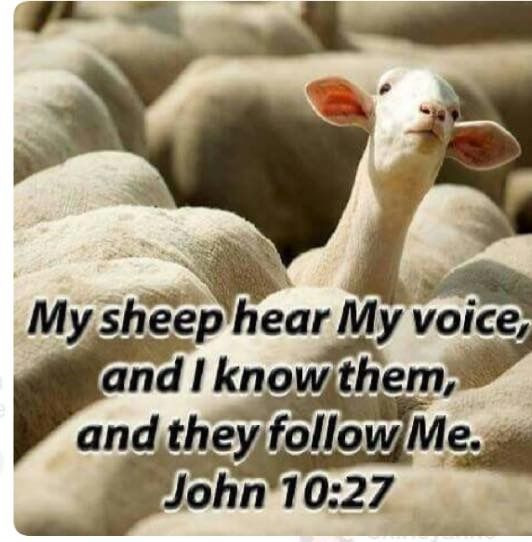My sheep hear my voice.jpg